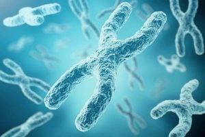 अपनी बुद्धि अपनी माँ से मिलती है: X क्रोमोज़ोम