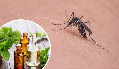 11 जड़ी-बूटियां जो मच्छरों को दूर भगाती हैं