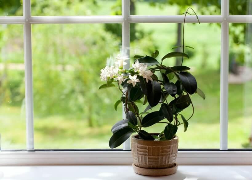 बेडरूम को कीटाणुमुक्त रखने में पेड़-पौधों का योगदान