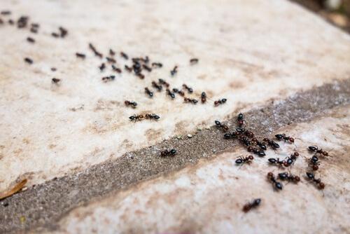 कीड़े-मकौड़ों से छुटकारा पाएं