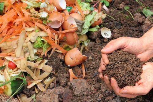 5 तरीके : अपने पौधों के लिए नेचुरल कम्पोस्ट खाद बनाने के