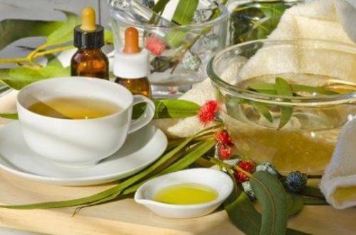 यूकेलिप्टस की चाय