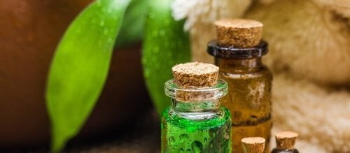 टी ट्री ऑयल : वह अद्भुत तेल जिसके हैं कई नायब फायदे
