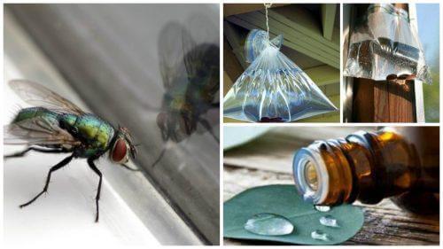 7 घरेलू उपाय: घरेलू मक्खियों से छुटकारा पाने के लिए
