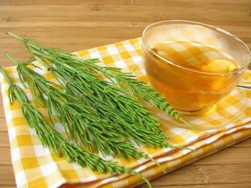 UTI यूरिनरी ट्रैक्ट इन्फेक्शन से लड़ने के लिए हॉर्सटेल टी (Horsetail tea)
