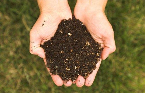 स्वस्थ मिट्टी