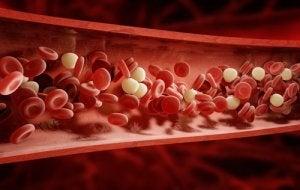 अदरक का पानी शरीर में खून का प्रवाह सुधारता है