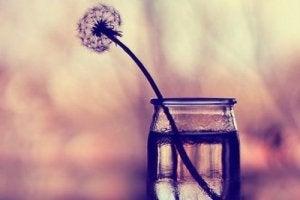 महिलाओं के लिए पांच बातें : अपने आपको कुछ दें