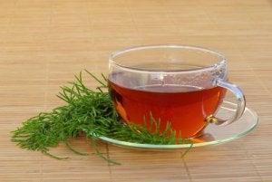 यूरिनरी ट्रैक्ट इन्फेक्शन : हॉर्सटेल टी (Horsetail tea)