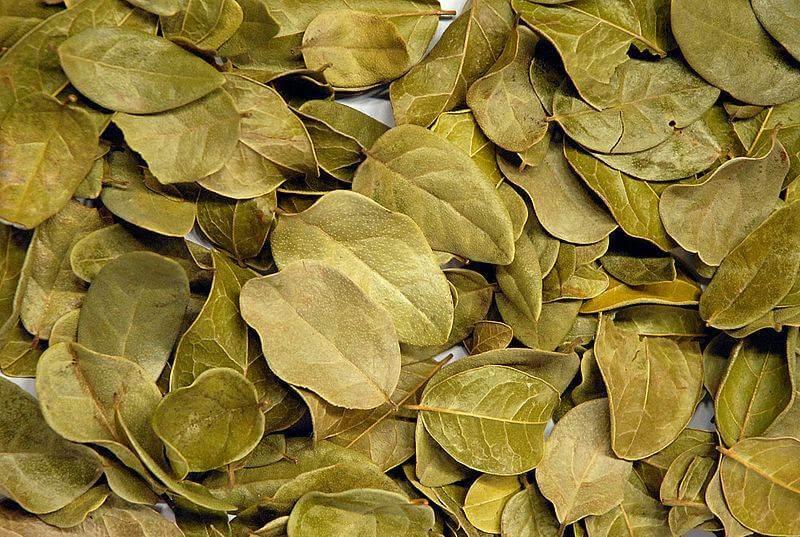 बोल्डो की पत्तियां