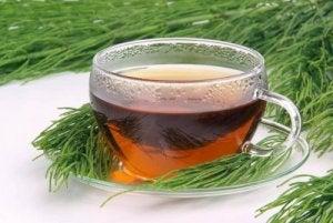 हॉर्सटेल और ग्रीन टी अर्क (Horsetail and Green Tea Infusion)