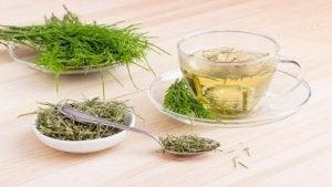 अश्व पुच्छा चाय या हॉर्सटेल टी (Horsetail Tea)