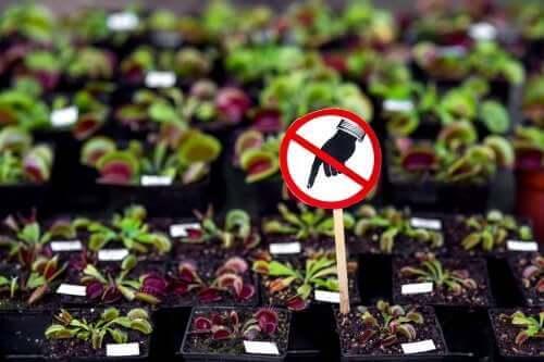 7 खतरनाक पौधे जिन्हें आपको घर पर नहीं रखना चाहिए