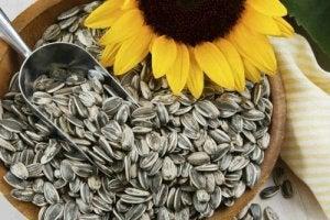 सेल्युलाईट : सूरजमुखी के बीज