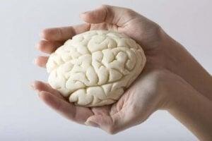 मस्तिष्क के हिस्से कैसे बंटे हैं