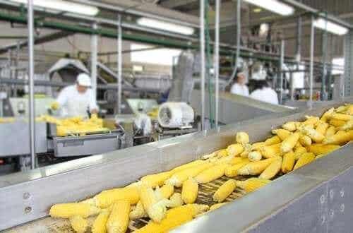 खाद्य पदार्थों के न्यूट्रीशन वैल्यू पर फ़ूड प्रोसेसिंग का असर