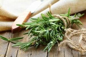 हर्ब मेंहदी Rosemary