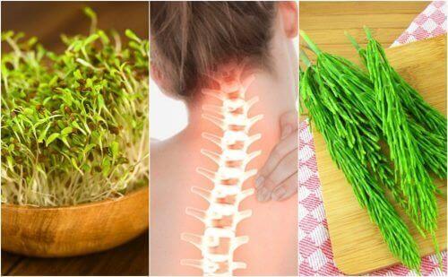 7 औषधीय पौधे जो आपकी हड्डियों की सेहत मजबूत रखने में मदद कर सकते हैं