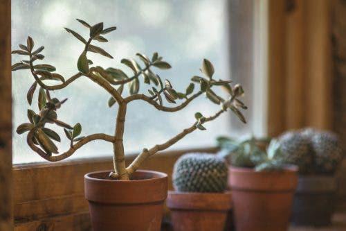 घर पर पौधे होने के 7 फायदे