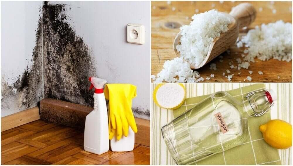 घर की नमी दूर करने के 5 असरदार तरीके