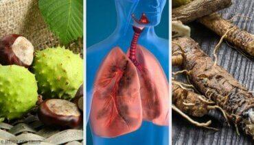 फेफड़े मजबूत करने के लिए 4 घरेलू इलाज